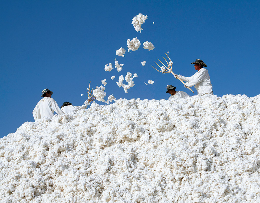 Organic Cotton Flannel Muji