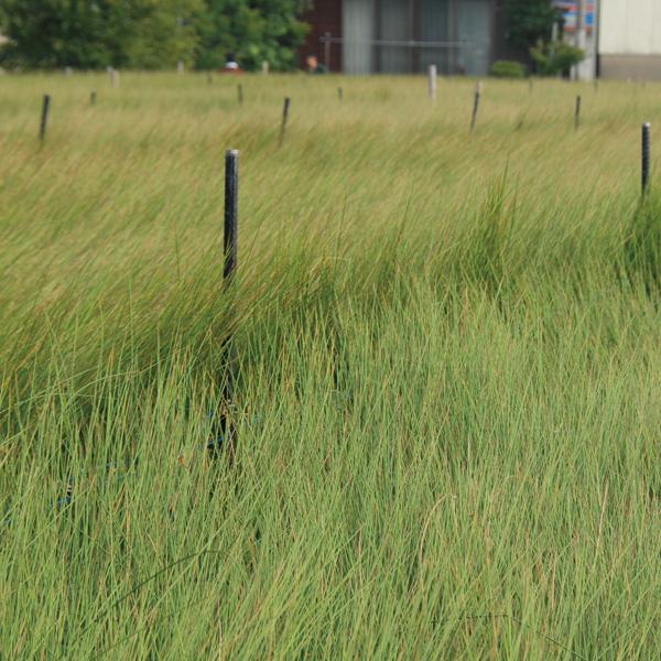 無印良品では、通常行われる緑色を保つための泥染めをせず、素材本来の風合いと味わい深い色を再現しています。イ草そのものの素材感をお楽しみください。
