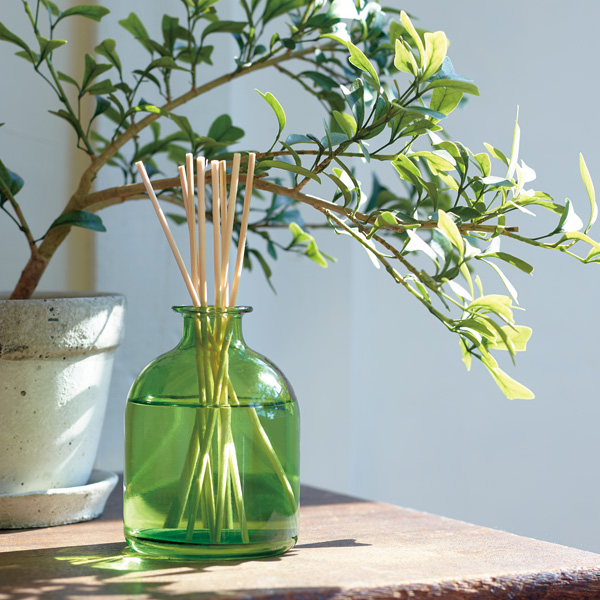 interior fragrance with plants