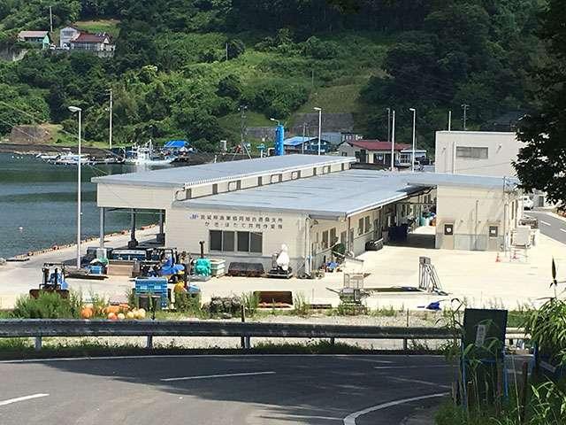 供給者画像:生産者名 宮城県漁業協同組合唐桑支所
