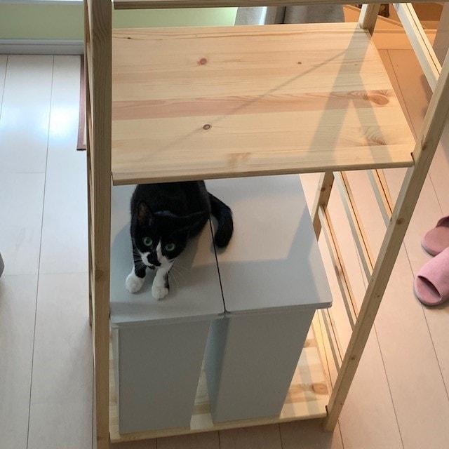 キービジュアル画像:我が家が最近購入した物~棚編~|スタッフのおすすめ