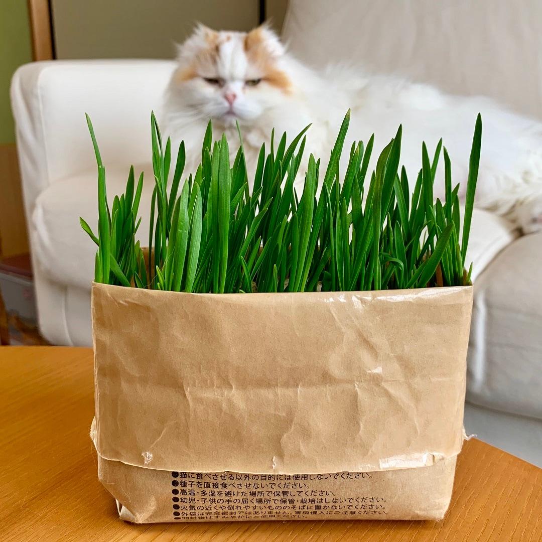 キービジュアル画像:猫草栽培セット 猫と暮らす無印良品