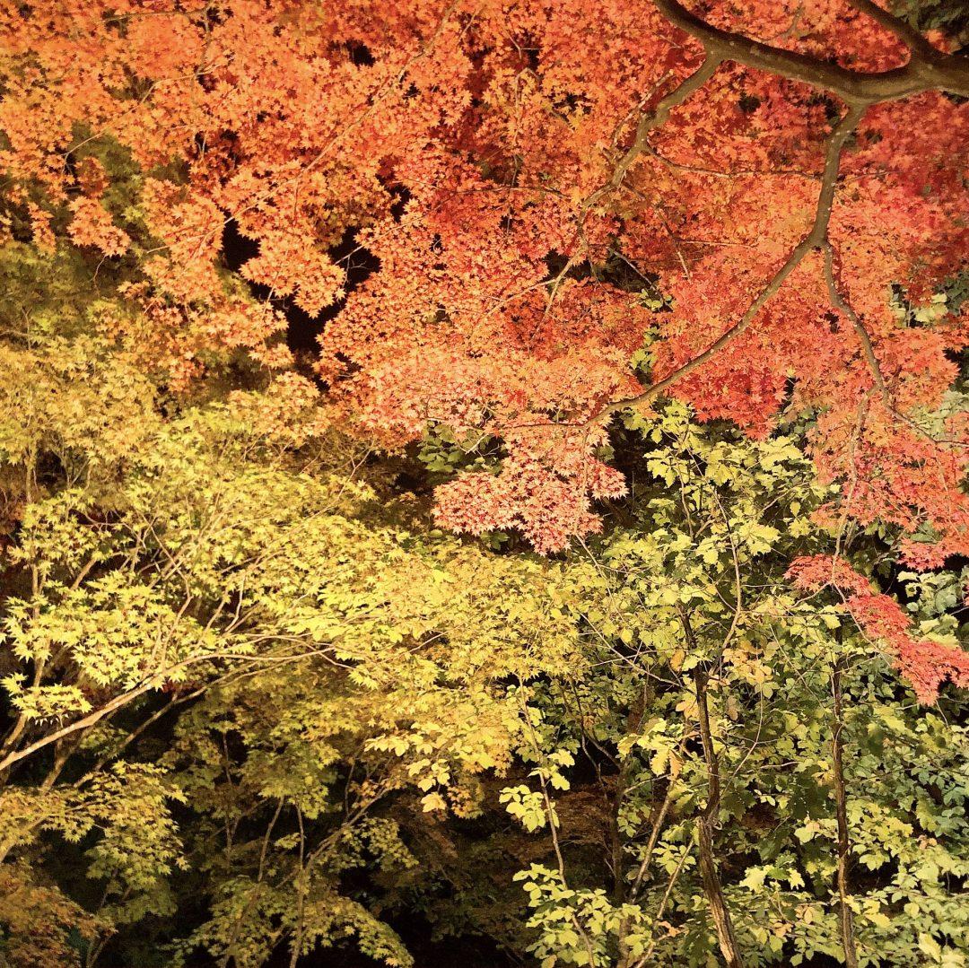キービジュアル画像:夜の香雪園にいってきました|ハコダテ便り