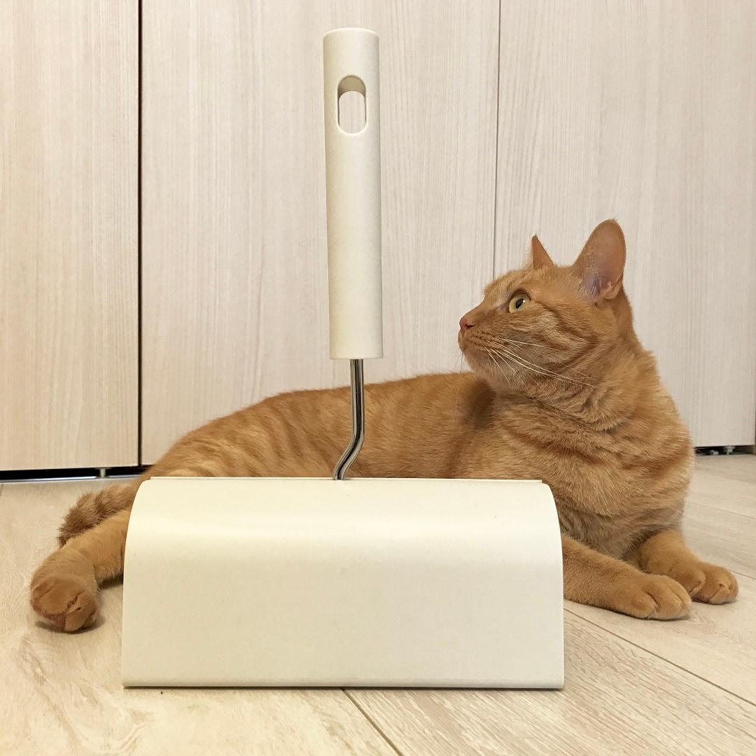 キービジュアル画像:猫との暮らしの必需品│スタッフのおすすめ
