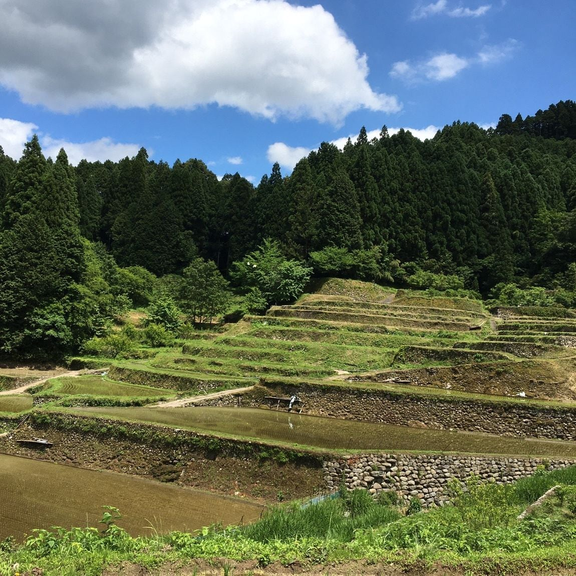 【MUJIキャナルシティ博多】つづら棚田に行ってきました