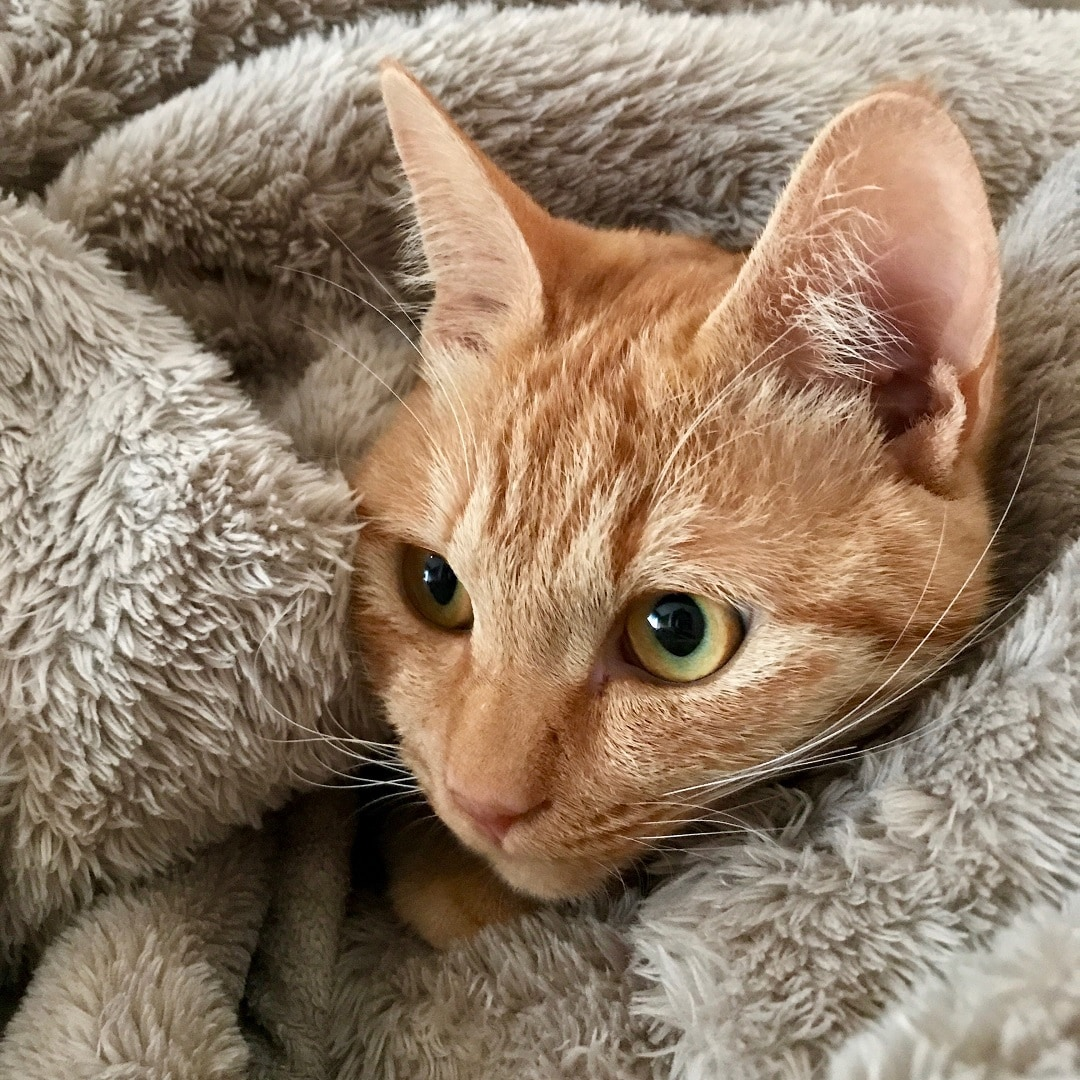 キービジュアル画像:【MUJIキャナルシティ博多】猫は毛布でも丸くなる|スタッフのおすすめ