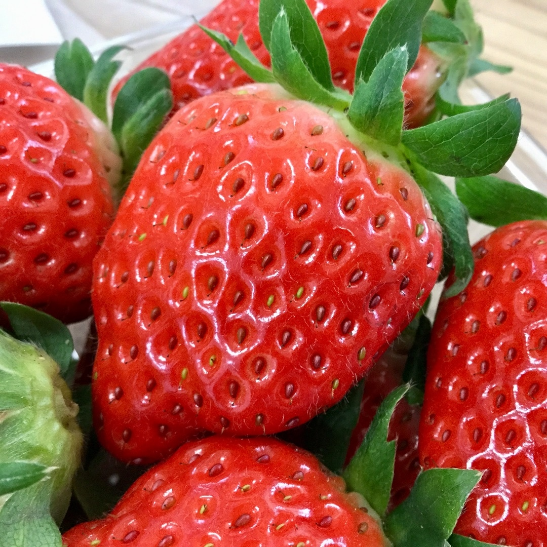 【みんなみの里】イチゴ