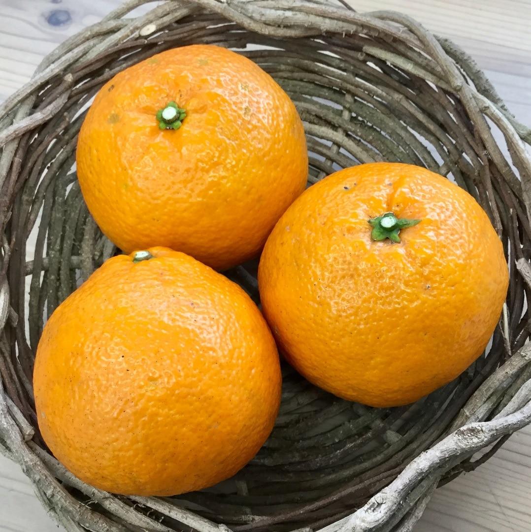 【みんなみの里】福原オレンジ