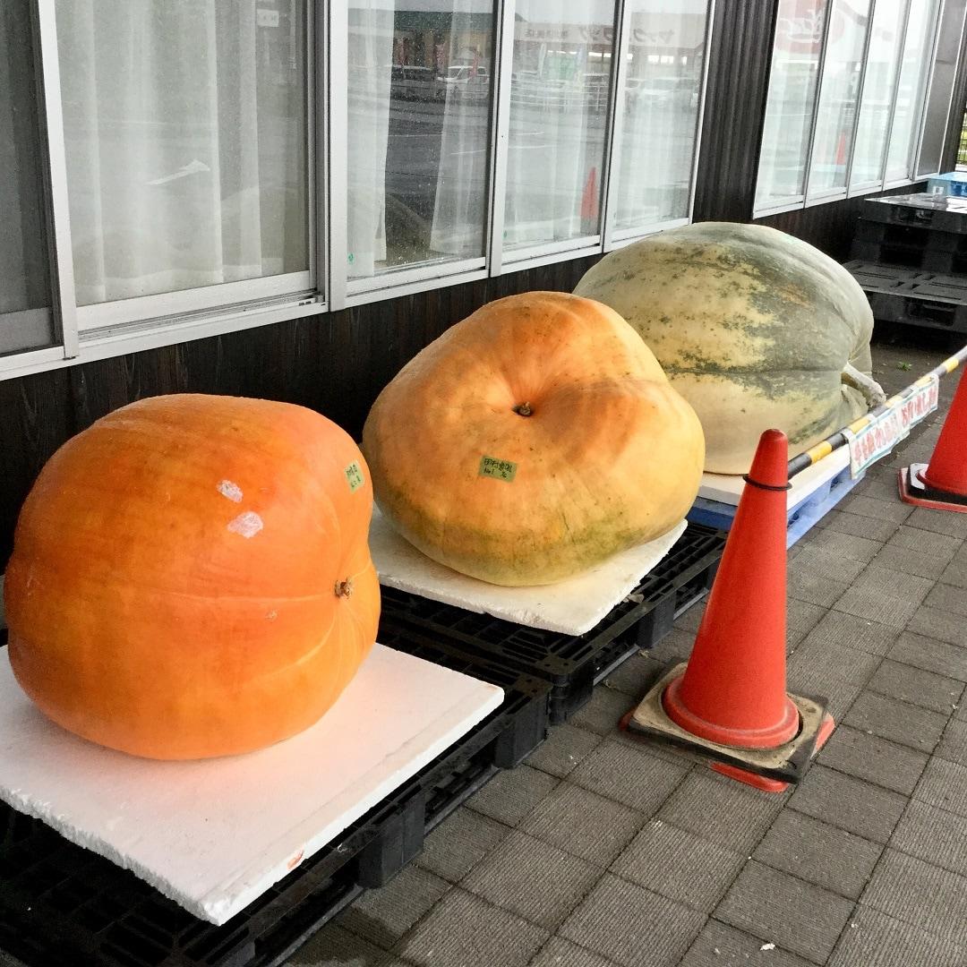 【みんなみの里】ジャンボかぼちゃ