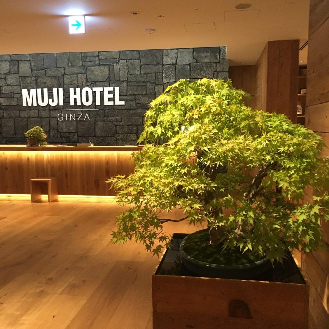キービジュアル画像:MUJI HOTELのロビーの盆栽|MUJI HOTEL GINZA