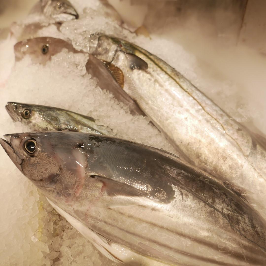 キービジュアル画像:魚のおすすめ:小田原の季節の鮮魚  B1F MUJI Diner 銀座