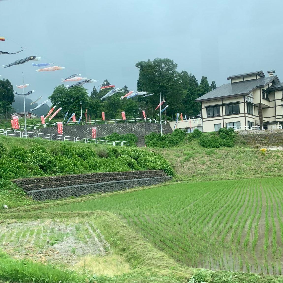 車窓からの景色。鯉のぼりと田んぼ。