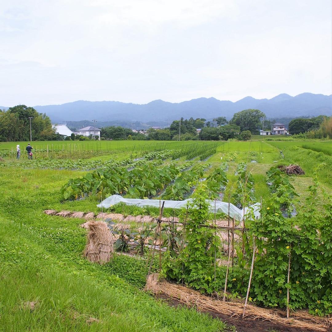 石谷さん農園
