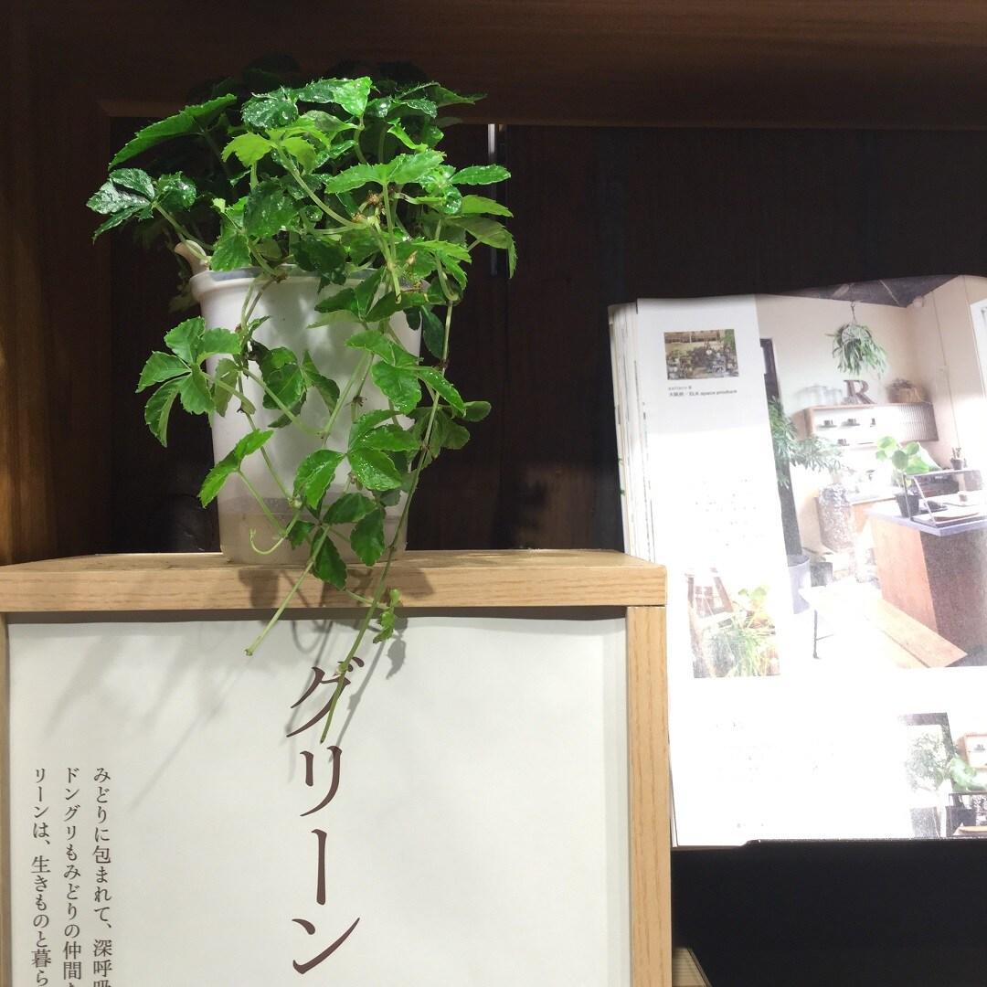 【MUJIキャナルシティ博多】グリーン1