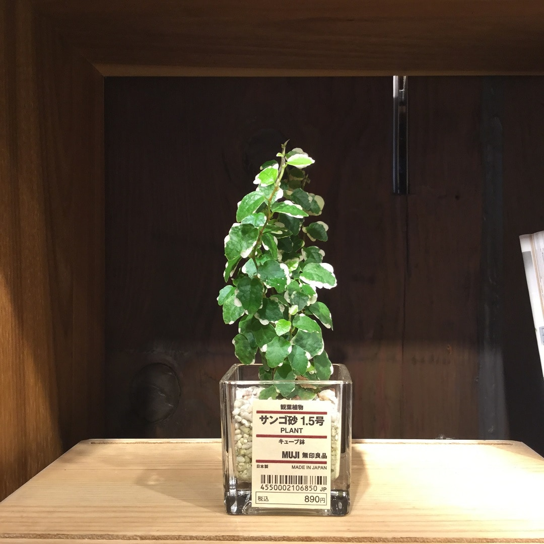 【MUJIキャナルシティ博多】コンパクトなサンゴ砂