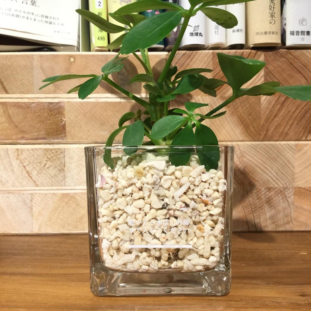 【MUJIキャナルシティ博多】観葉植物サンゴ砂