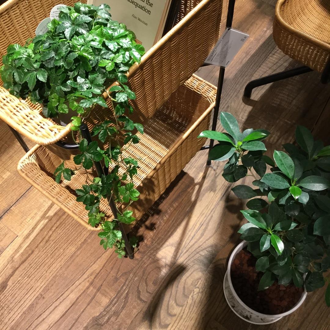 【MUJIキャナルシティ博多】店内グリーンツアー9