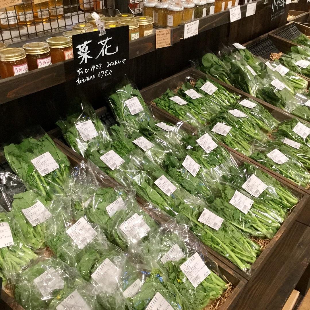 【みんなみの里】収穫市菜花