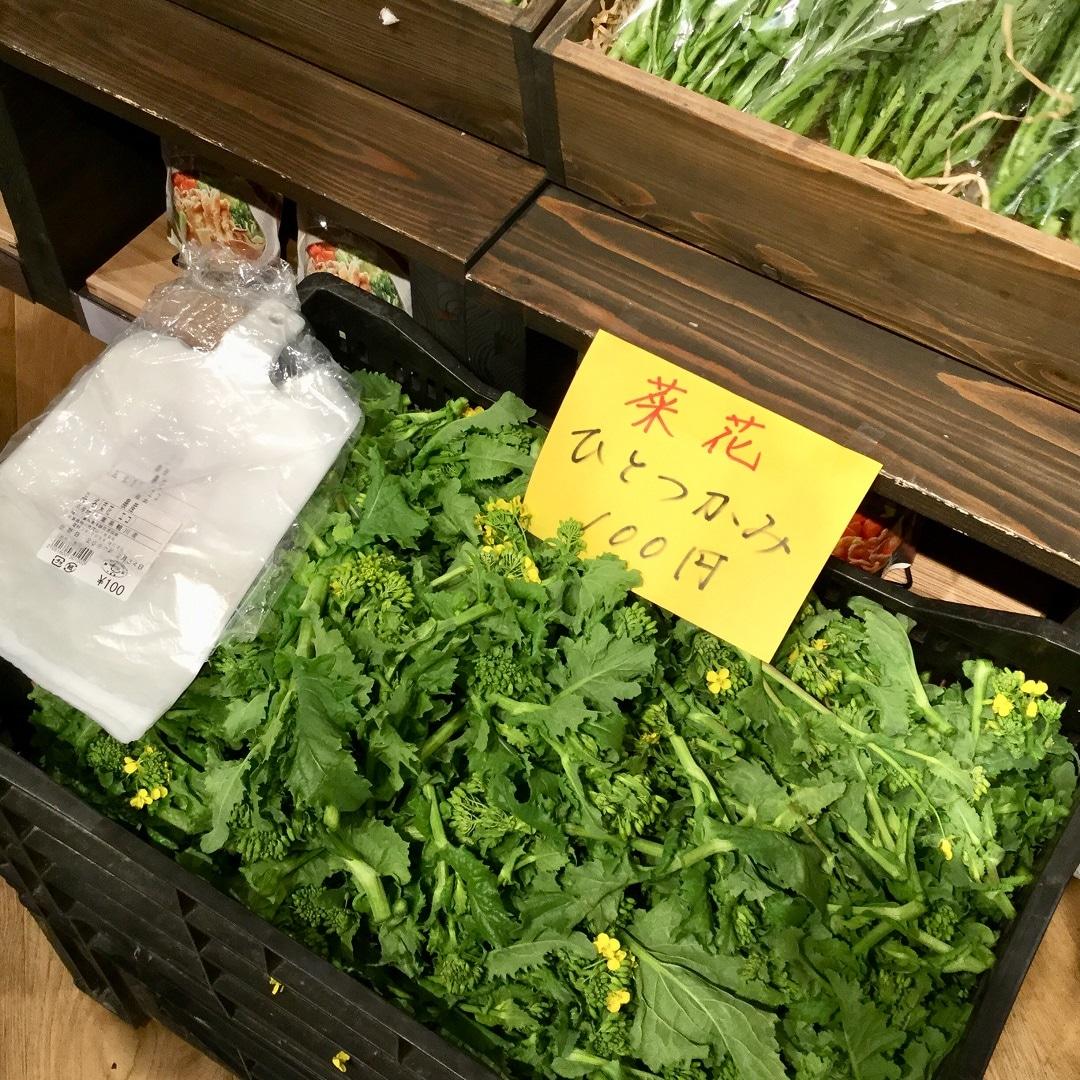 【みんなみの里】菜花つかみ取り