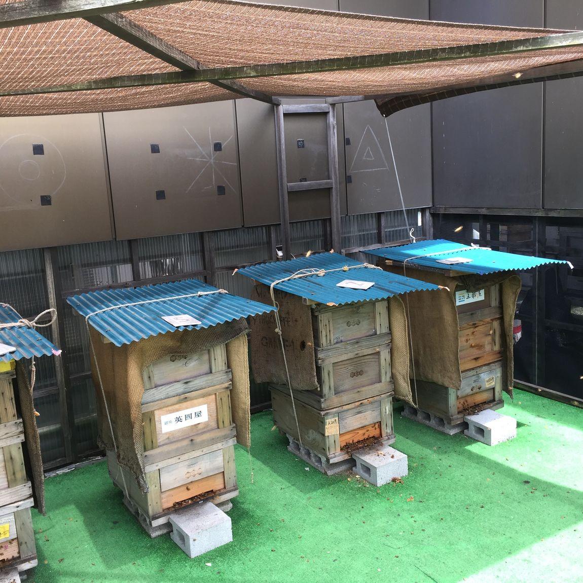 【銀座】銀座(ひと)めぐり|銀座ミツバチプロジェクト