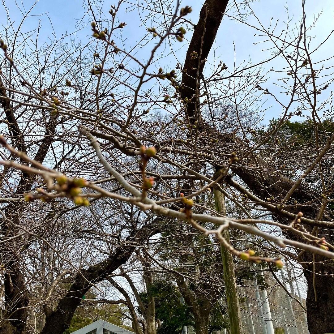 【Cafe&Meal MUJI上野マルイ】春がそこまで