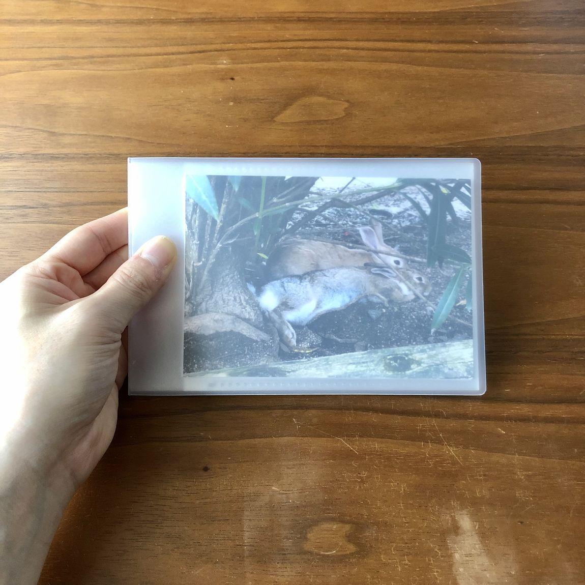 【イオンモール堺北花田】どんな写真を入れてもぴったり『ポリプロピレン高透明フィルムアルバム』|スタッフが選ぶ無印良品
