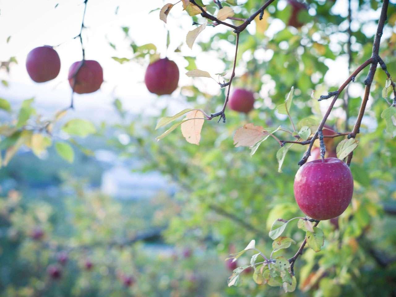キービジュアル画像:地域ならではの持続可能な農業を目指して