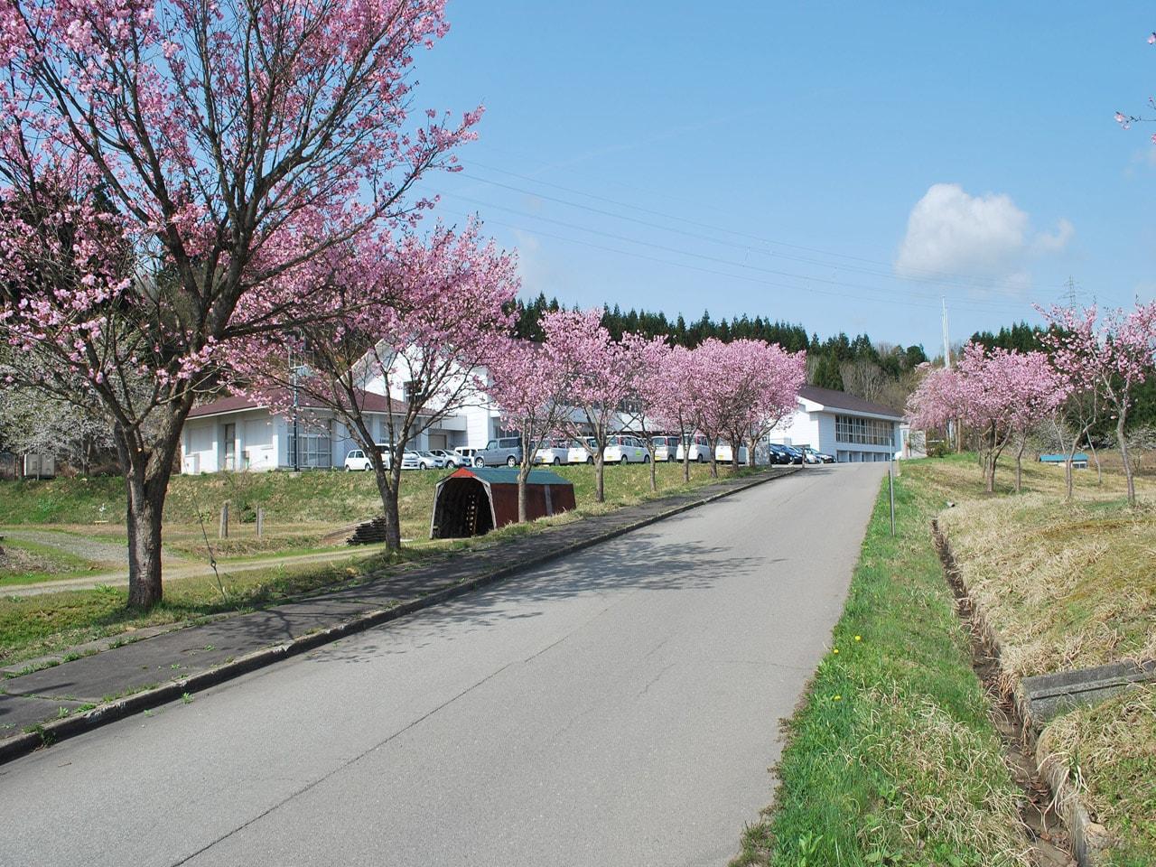 キービジュアル画像:廃校になった旧「明通(アケドオリ)小学校」で始めたチーズ工房