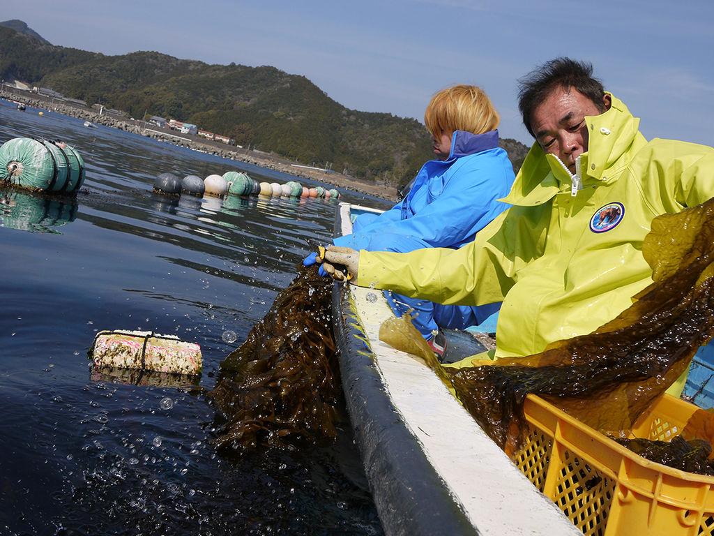 三重県産100%の海藻を、こだわり製法で届ける。