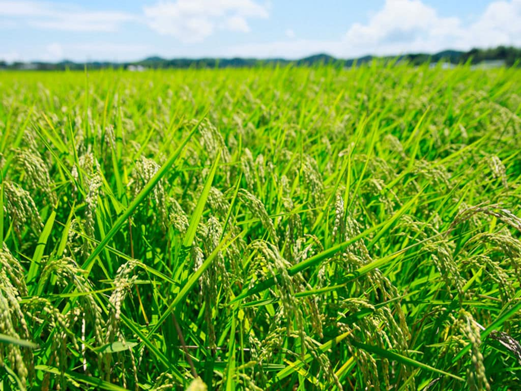農薬・化学肥料不使用、特別栽培米「いすみっこ」