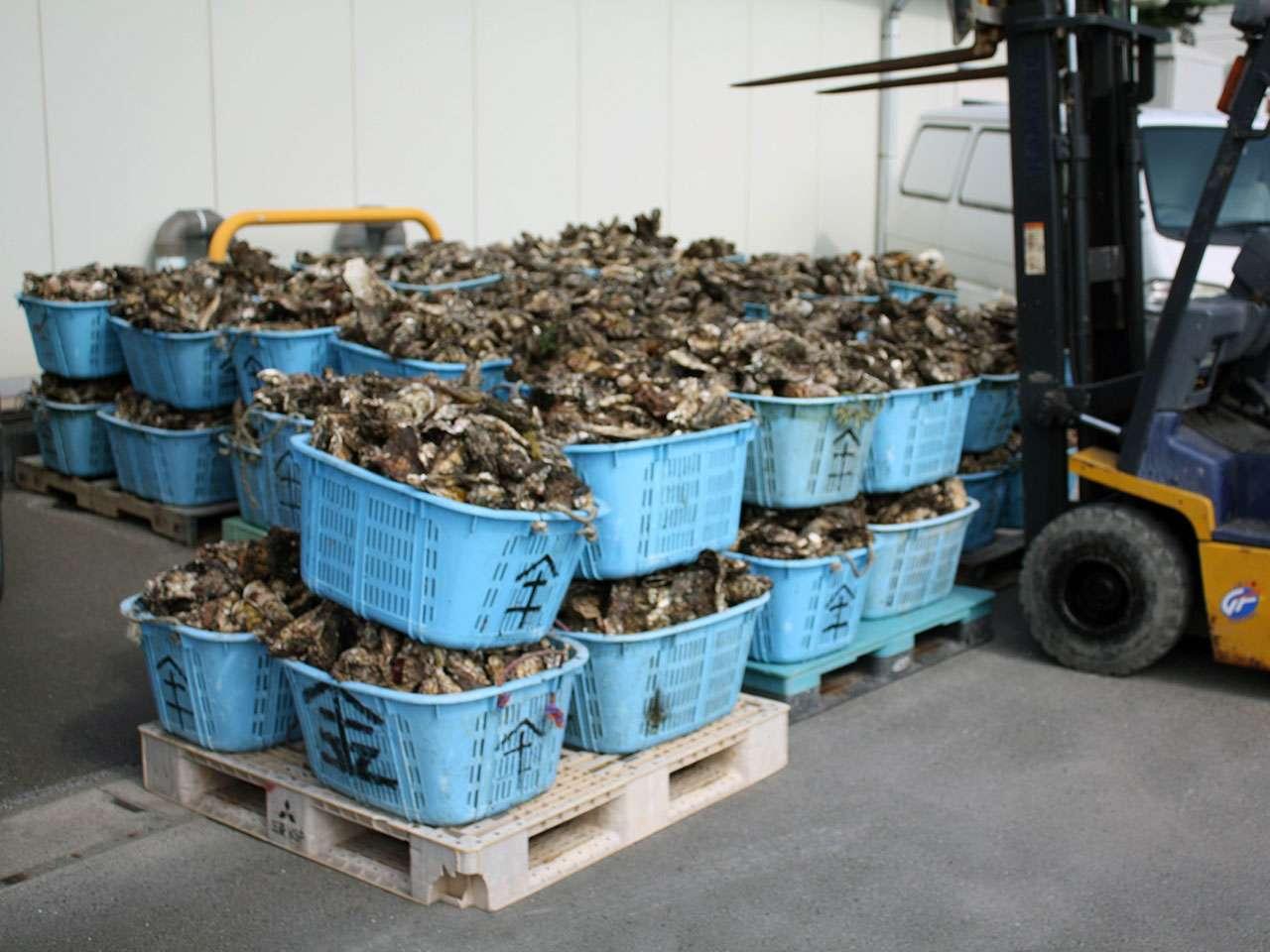 キービジュアル画像:「喜食伝心」牡蠣の旨味を、まるごと、そのまま。