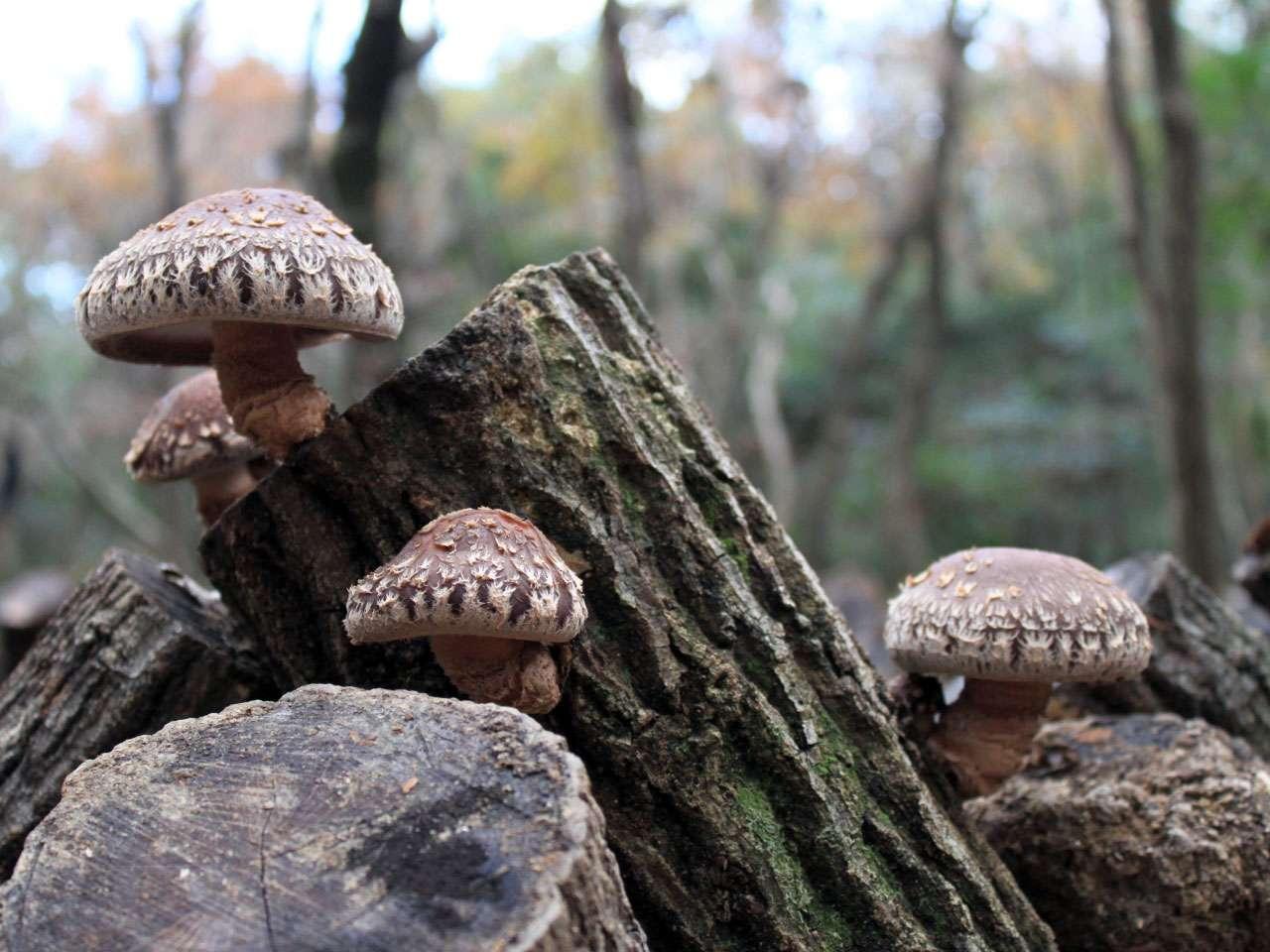 キービジュアル画像:風土に根ざした伝統の森林栽培