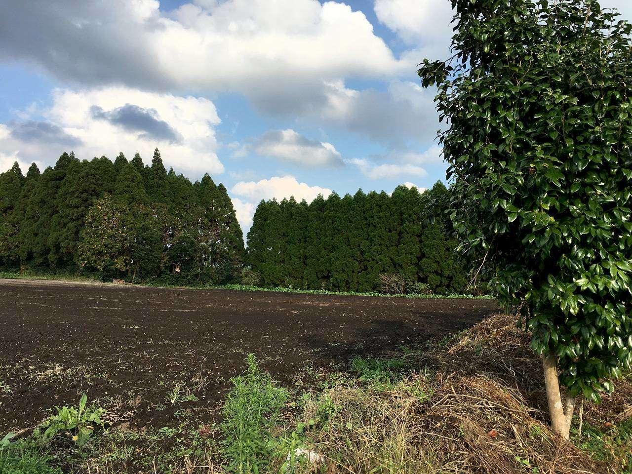 キービジュアル画像:自社農園で土づくりから、風味豊かな油づくりに