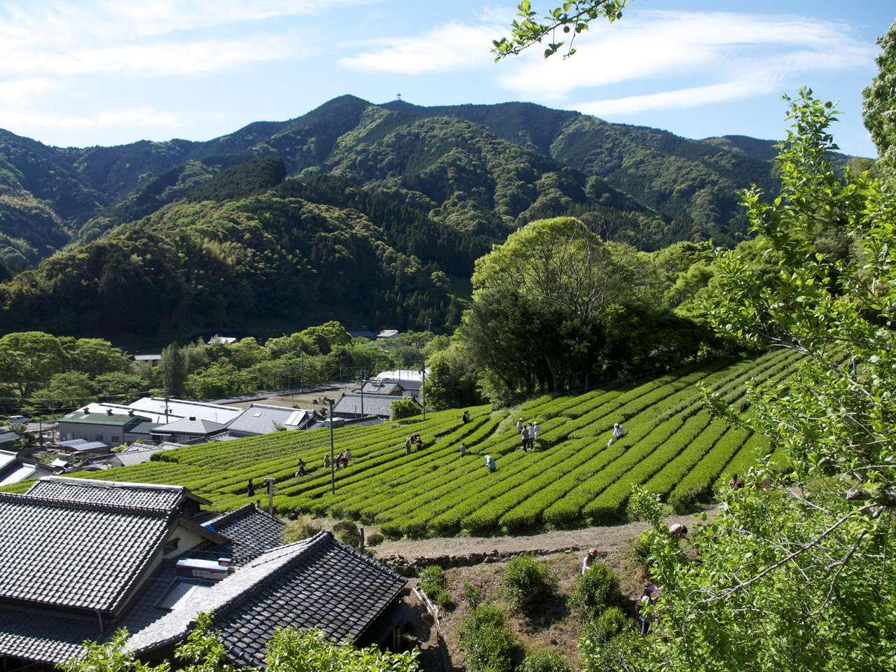 キービジュアル画像:自然界のつながりの中で生まれる、有機栽培のお茶