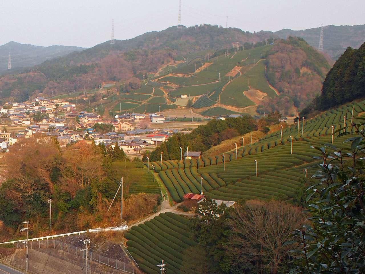 キービジュアル画像:日本茶800年の歴史を紡ぐ茶源郷、京都・和束町