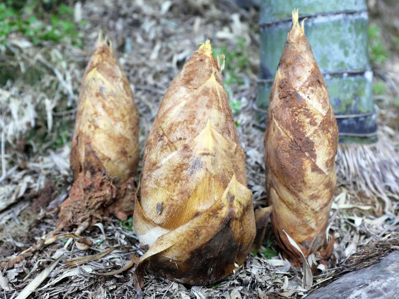 キービジュアル画像:おいしく食べて森林保全にもつながる、北九州の春の味覚