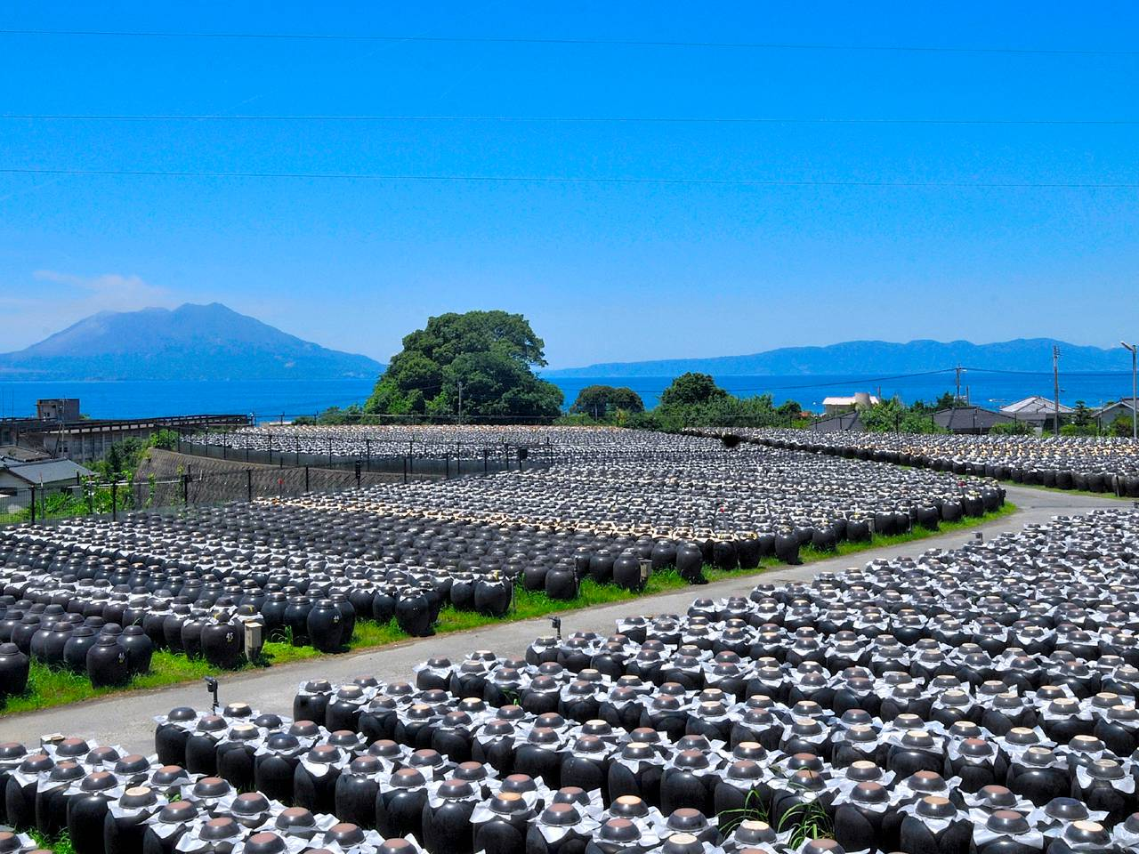 キービジュアル画像:鹿児島の壺造り黒酢。坂元のくろず