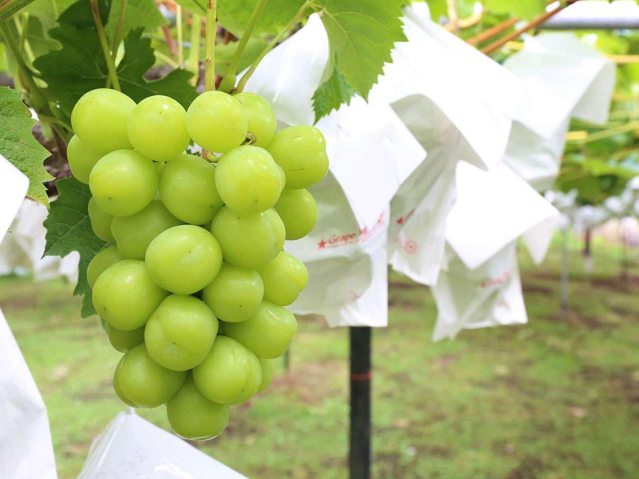 キービジュアル画像:農薬に頼らず、適地適作で育てる信州の果実