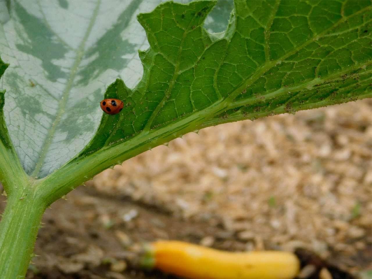 キービジュアル画像:籾殻を使った土壌開発と無農薬でつくる、面白い野菜達