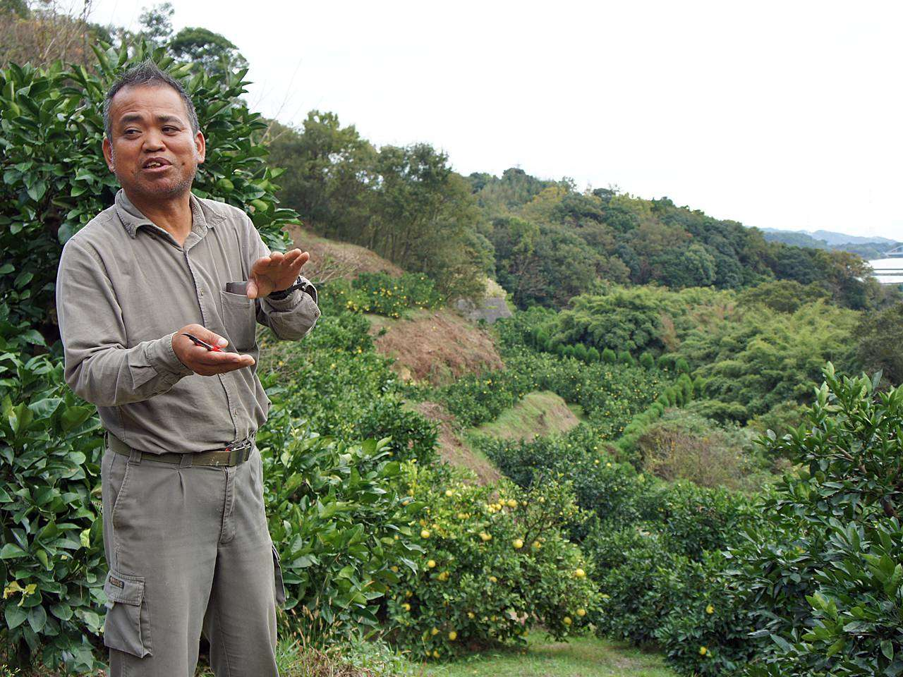 キービジュアル画像:熊本上天草の「みずの果樹園」、地元でも人気のみかん達