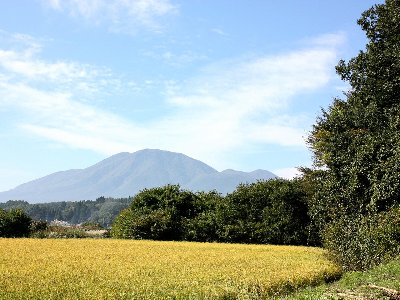 キービジュアル画像:激減する米産業の実態を知り、自らその現場に挑む
