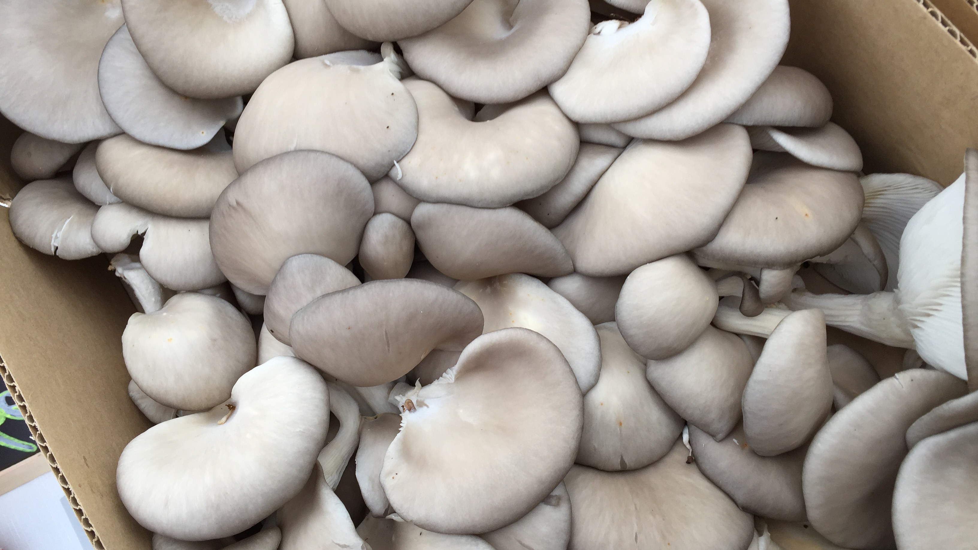 oyster_and_king_muji_community_market
